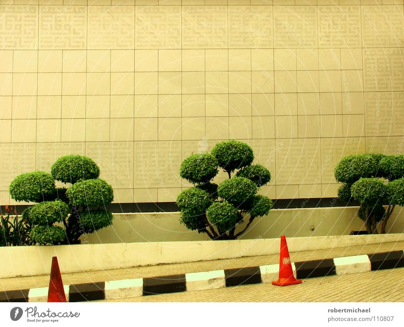 diagonal caps Bonsar Wall (building) Tree Small Branchage Bushes Hat Traffic cone Lane markings Black White Striped Green Barrier Close Rule Expressway exit