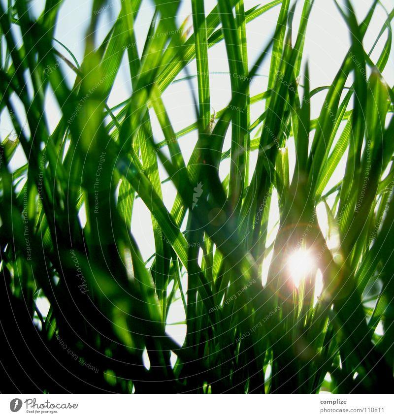 Nature Sun Green Blue Summer Meadow Grass Spring Park Warmth Lighting Lawn Physics Blade of grass Beetle Blue sky