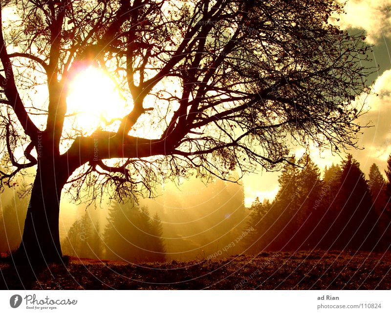 Sky Tree Sun Clouds Cold Autumn Warmth Brown Weather Treetop Branchage Awareness Clearing Beam of light Enchanted forest Natural growth