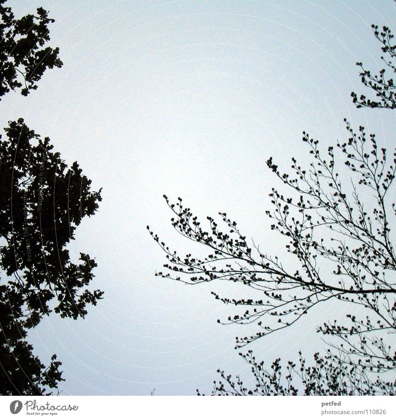 Treetops XII Autumn Forest Leaf Winter Black White Under Clouds Sky Branch Twig Nature Blue Shadow Tall To fall Wind