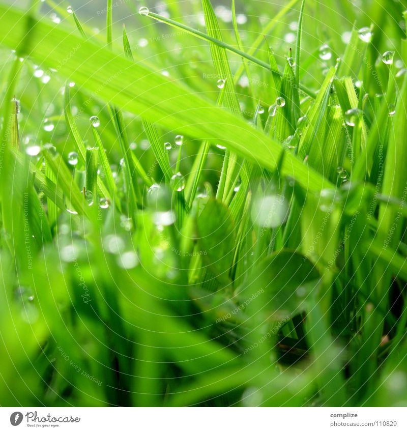 Nature Water Green Plant Summer Meadow Grass Spring Park Drops of water Wet Growth Round Clean Damp Pasture