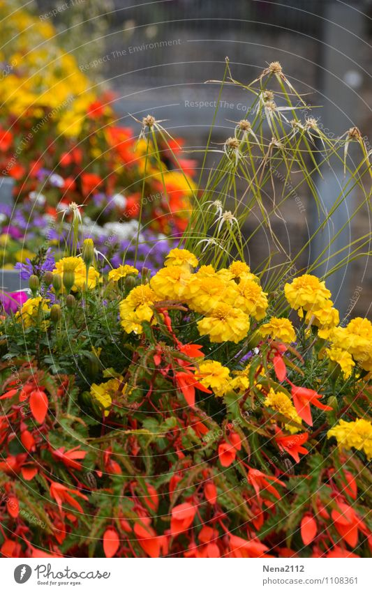 flower power Environment Nature Plant Spring Summer Flower Pot plant Garden Park Village Small Town Downtown Old town Multicoloured Yellow Red Colour photo