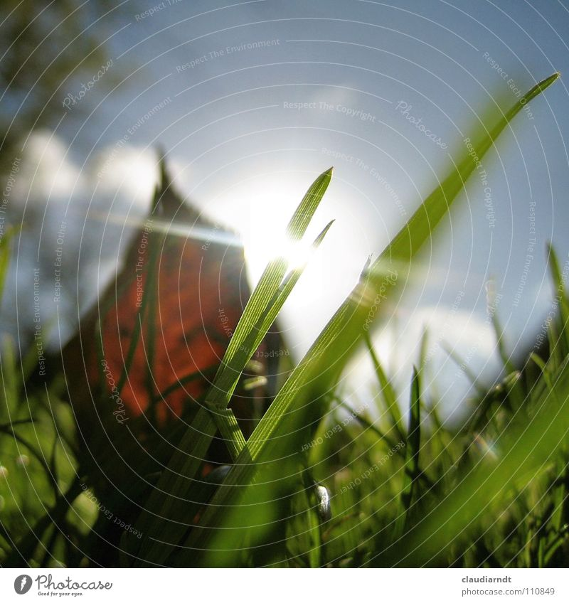 Beetle's awakening Meadow Grass Blade of grass Green Sunbeam Light Dazzle Autumn Leaf Transparent Worm's-eye view Small Perspective Morning Wake up Fresh Lawn