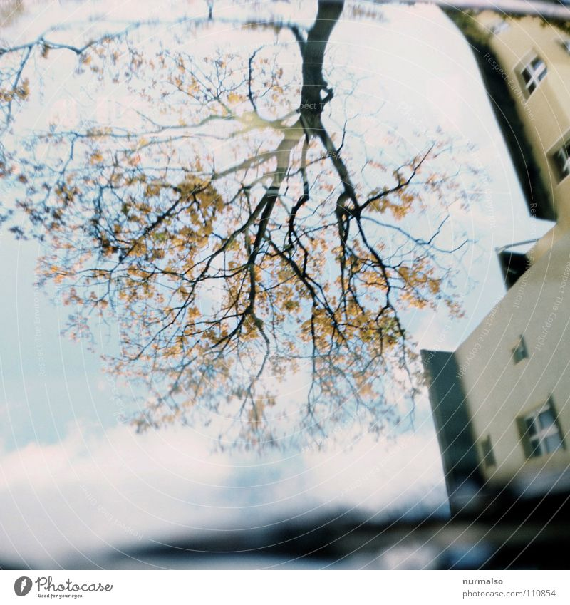 root branch Reflection Autumn House (Residential Structure) Windscreen wiper Yellow Mirror image Sky Tree Transience Window pane Leaves bare Blue Branch Free