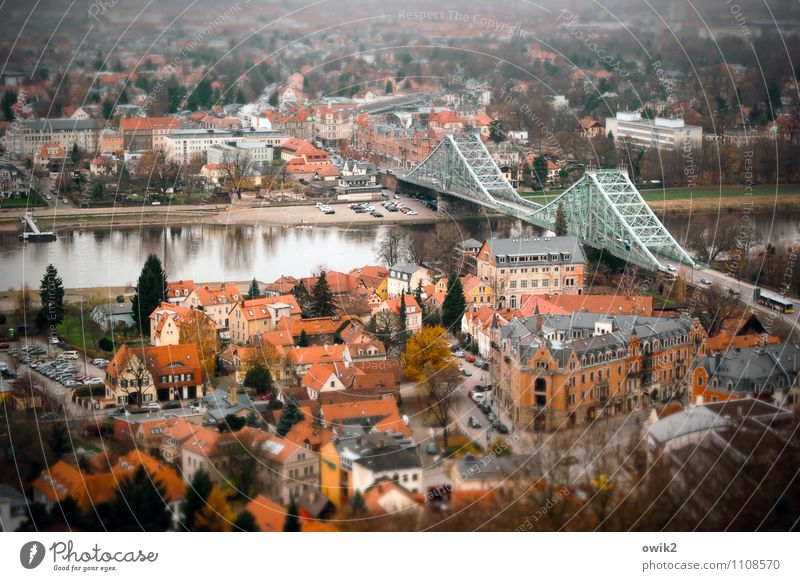 Dresden Loschwitz Tourism City trip Tree River Elbe Nasty surprise Villa Town Populated House (Residential Structure) Facade Roof Street Car Serene Calm Longing