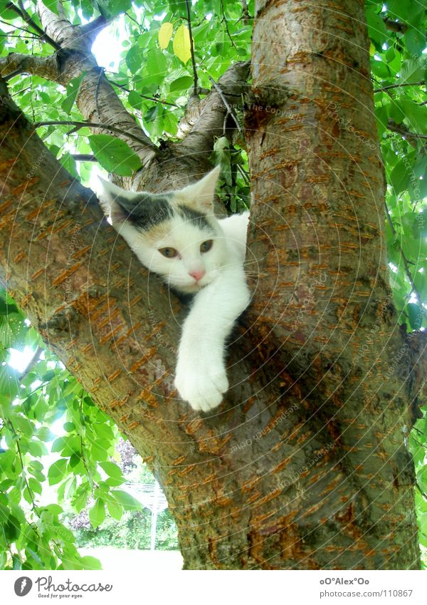 Chill out Contentment Relaxation Spring Cat Dream Boredom Peace Mammal Colour photo