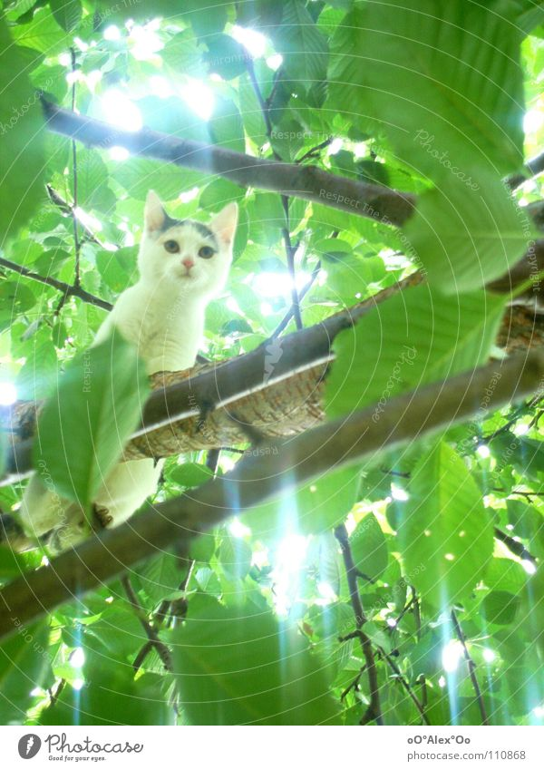 Cat Green Tree Animal Spring Bright Curiosity Treetop Mammal