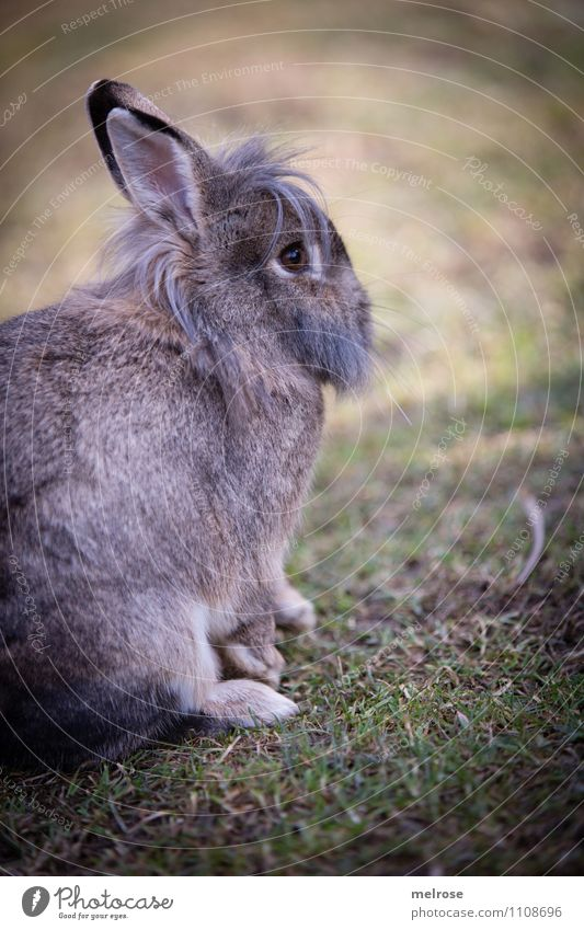 Relaxation before Easter Nature Spring Beautiful weather Grass Meadow Animal Pet Animal face Pelt Paw Pygmy rabbit Hare & Rabbit & Bunny Easter Bunny Rodent