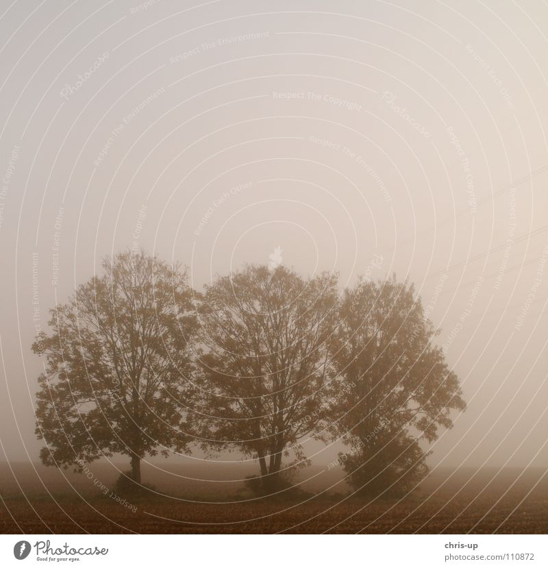 Trees in the fog 2 Field Agriculture Footpath Country road Vegetable farming Brown Green Fog Row of trees Dark Gray Vantage point Vista Morning fog Dew Winter