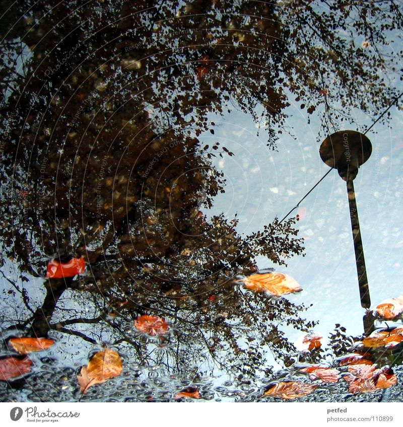 Autumn puddle I Tree Winter Street lighting Leaf Brown Gray Black Clouds White Seasons Water Rain Weather Orange Twig Branch Sky Blue
