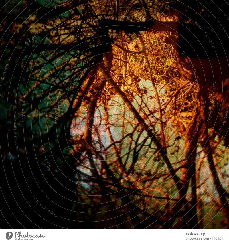Dark Network Fantastic Root Chaos Mystic Mystery Reticular Enchanted wood Root of a tree Mirkwood