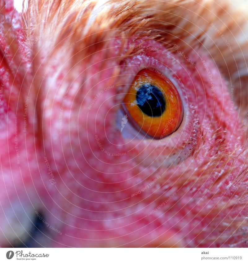 Eyes Nutrition Animal Fear Food Hunting Testing & Control Watchfulness Panic Caution Barn fowl Warped Feed Hunter Sacrifice