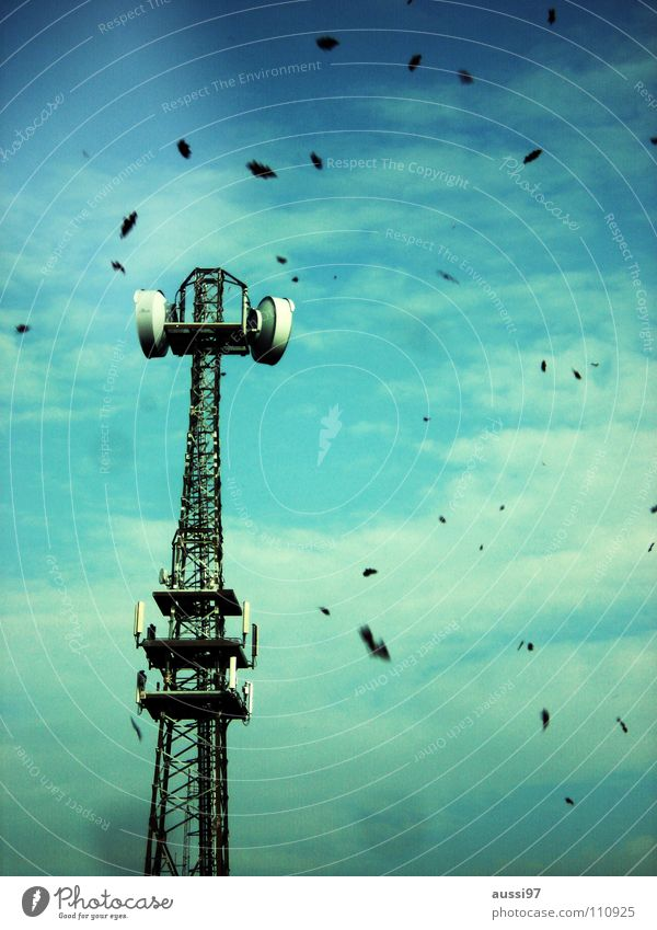 case Autumn Leaf Transmission power Seasons Industry To fall leaf fall Tower broadcasting tower Broadcasting