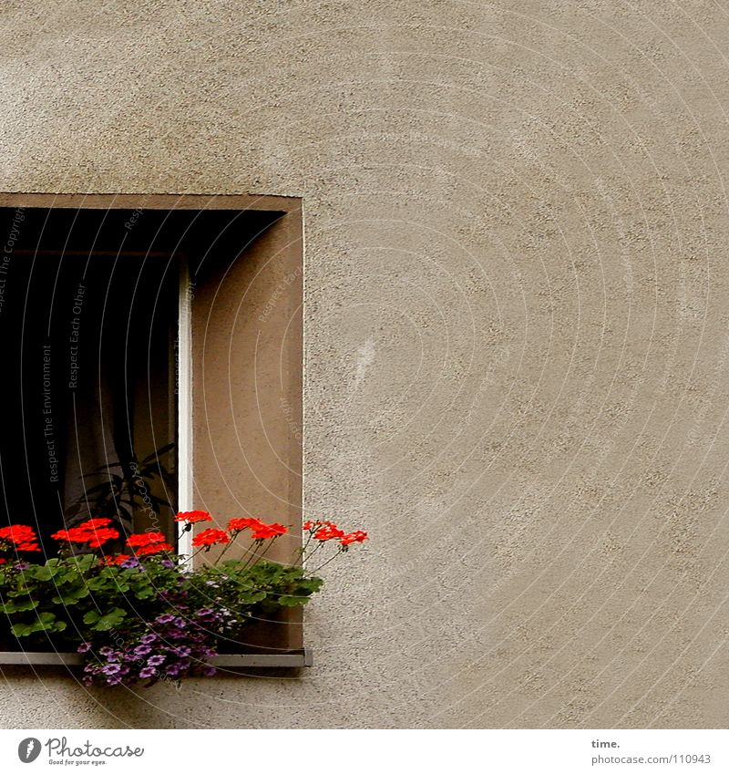 Green Beautiful Red Flower Window Wall (building) Wall (barrier) Room Stand Decoration Idyll Romance Dresden Square Plaster Laws and Regulations