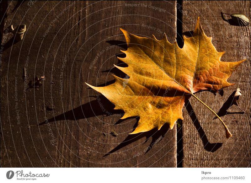 and the shadow Garden Nature Autumn Leaf Brown Yellow Colour lkpro colori marrone natur foglia giardino wood legno ombra assi board Axle giallo autunno fall