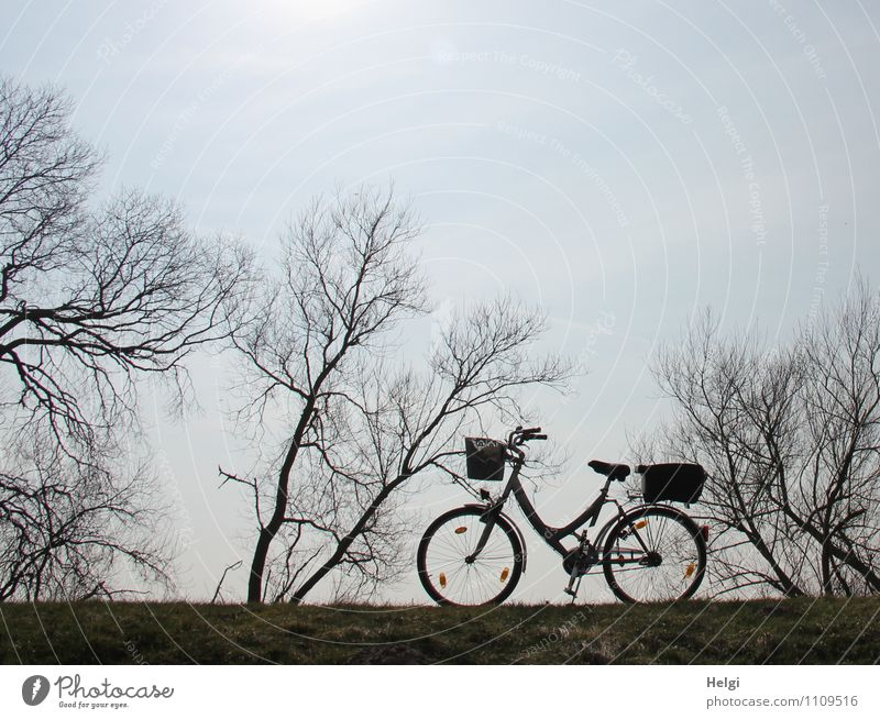 let's go... Leisure and hobbies Cycling tour Bicycle Environment Nature Landscape Plant Sky Spring Beautiful weather Tree Bushes Lanes & trails Stand Authentic