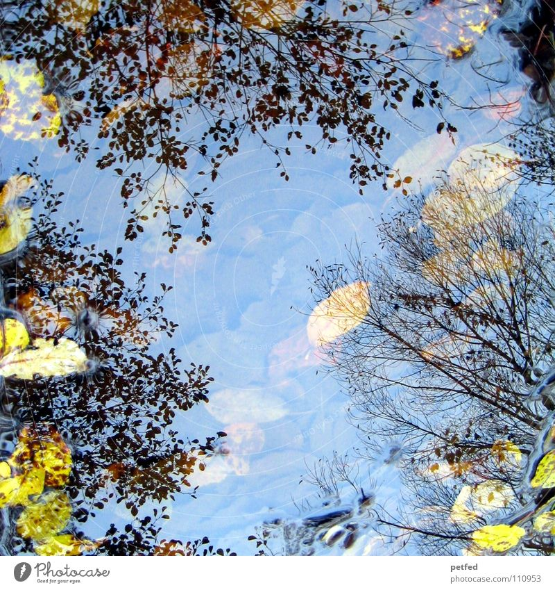 Autumn puddle tree crowns I Winter Leaf Reflection Under Tree Treetop Puddle Wind Weather Rain Branch Sky Above Nature