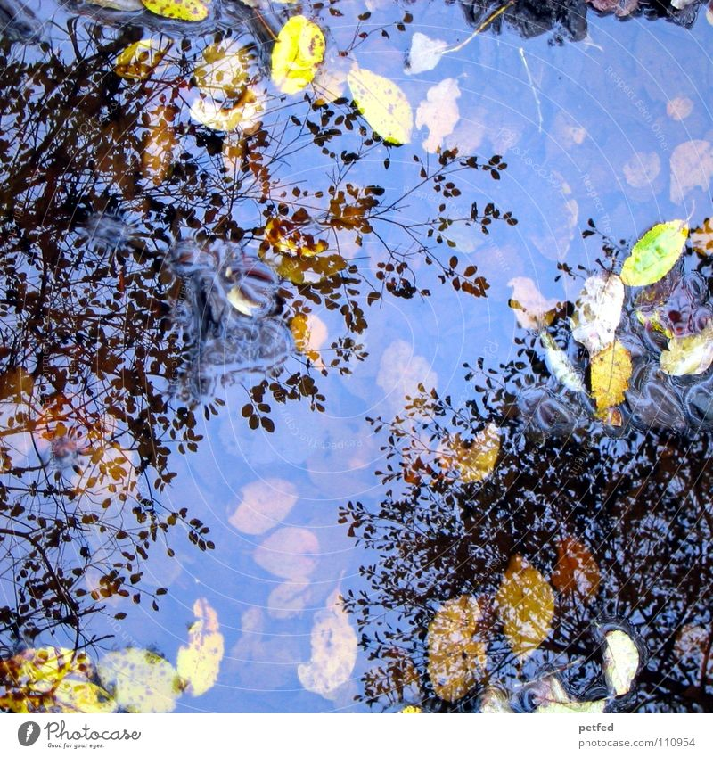Autumn puddle tree crowns II Winter Leaf Reflection Under Tree Treetop Puddle Wind Weather Rain Branch Sky Above Nature