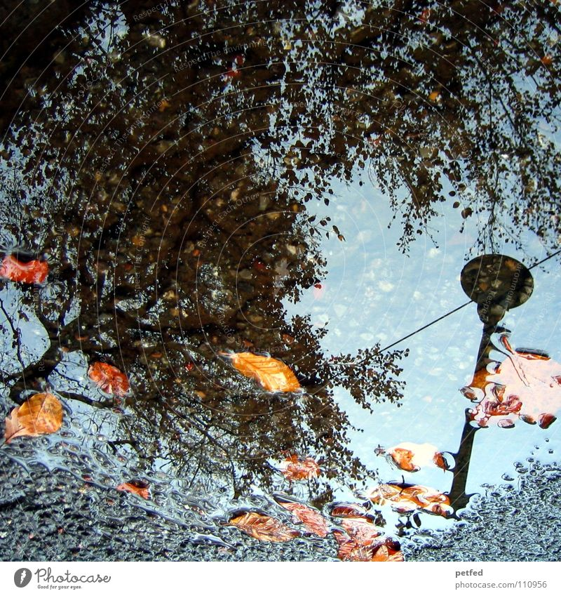 Autumn puddle II Tree Winter Street lighting Leaf Brown Gray Black Clouds White Seasons Water Rain Weather Orange Twig Branch Sky Blue