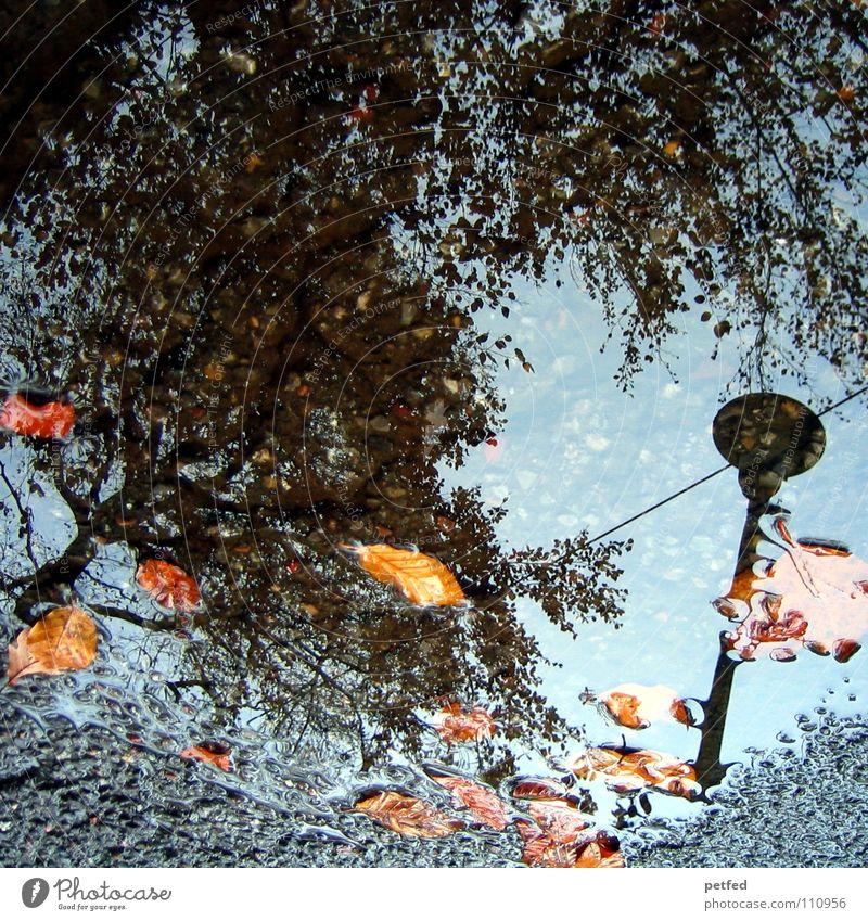 Water Sky White Tree Blue Winter Leaf Black Clouds Street Autumn Gray Rain Brown Orange Weather