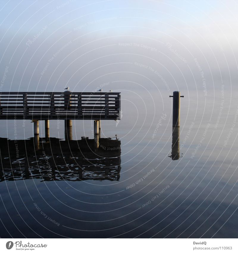 rest Body of water Lake Pond Interior lake Footbridge Jetty Vertauen Seagull Fog Washhouse Surface of water Reflection Calm Relaxation To be silent Autumn