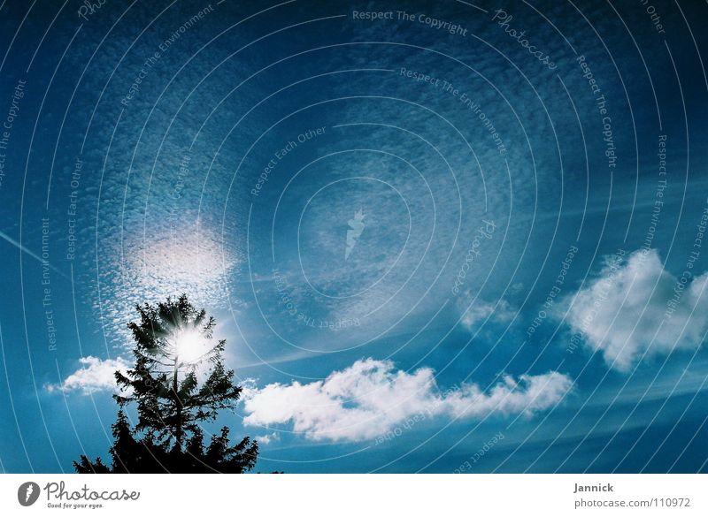 Sea of clouds Tree Clouds White Vapor trail Autumn Ocean Sky Blue Sun Twig Branch