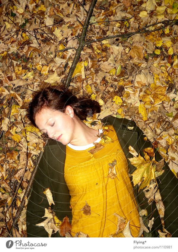 autumn sleep Autumn Leaf Yellow Dark green Green Peace Sleep Coat Emotions Transience Brunette Colour russet Floor covering Dirty Loneliness Lie Autumnal Branch
