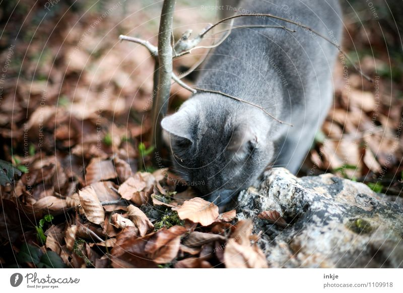 Cat Nature Leaf Animal Autumn Emotions Natural Gray Garden Brown Moody Park Observe Beautiful weather Curiosity Search