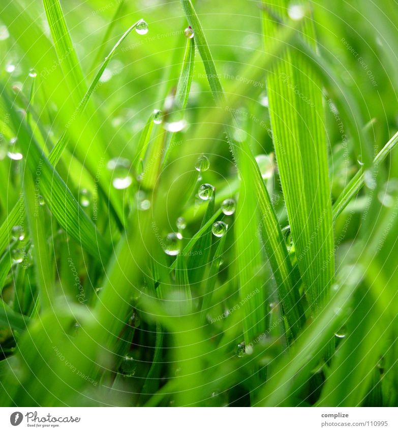 Nature Green Plant Summer Meadow Jump Grass Spring Park Drops of water Wet Growth Round Close-up Cow Damp