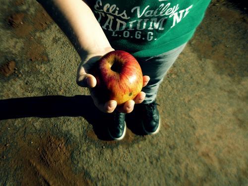 Sour apple Food Apple Nutrition Eating Breakfast Organic produce Vegetarian diet Diet Lifestyle Thanksgiving Parenting Education Kindergarten Study Human being