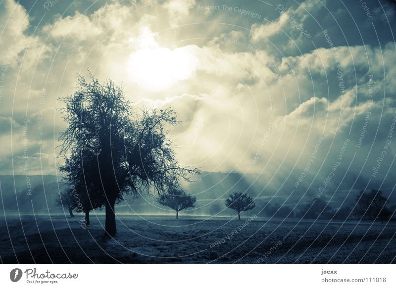 force Tree Row of trees Ground fog Relaxation Autumn Idyll Light Morning Think Fog Wall of fog Unclear Poetic Romance Calm Solar Power Sunlight Sunbeam Moody