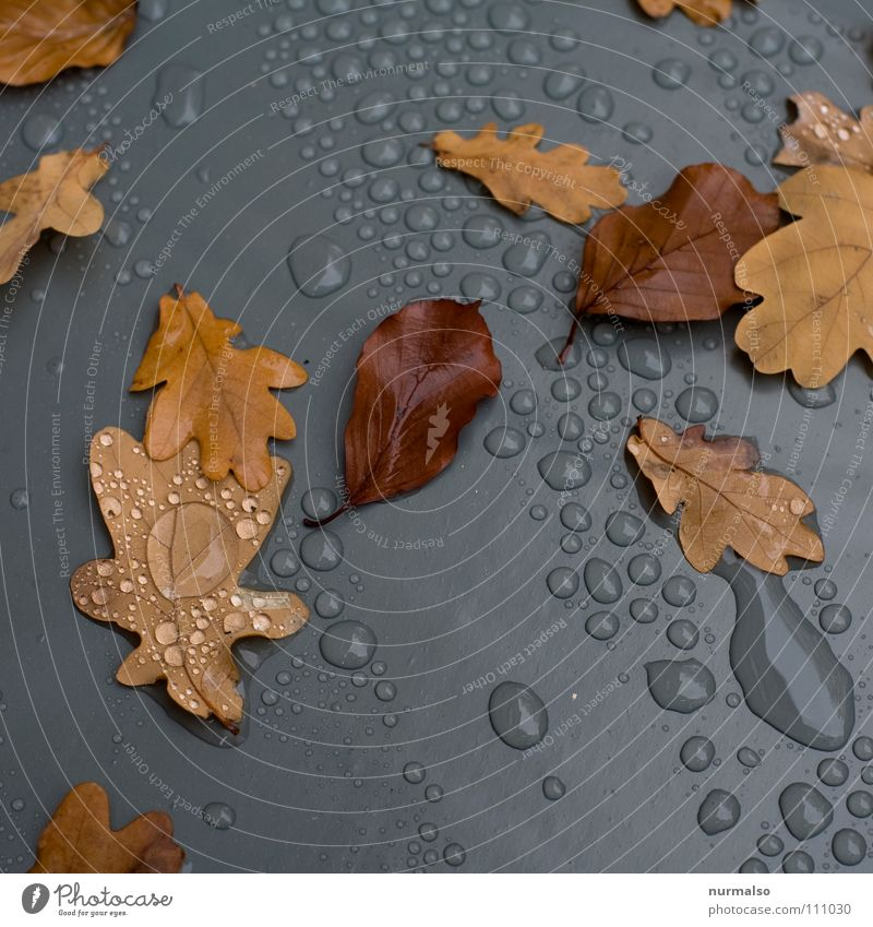 autumn grey Drops of water Leaf Autumn Gray Brown Reflection Oak tree Tree Covers (Construction) Cover up Rain Puddle Transience Plastic Statue Water Rope Acorn