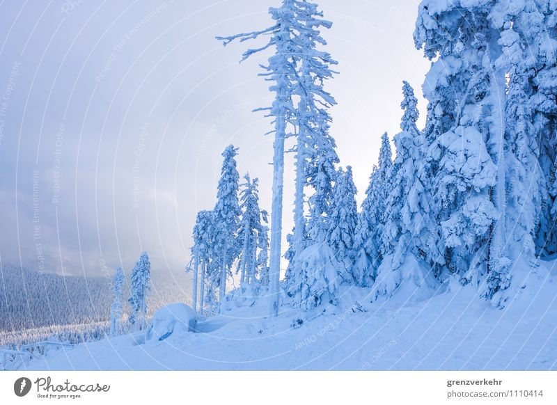 Blue Winter Forest Mountain Snowfall Snowcapped peak Skiing Ski resort Snowscape Winter vacation Ski run Sunset Indirect light