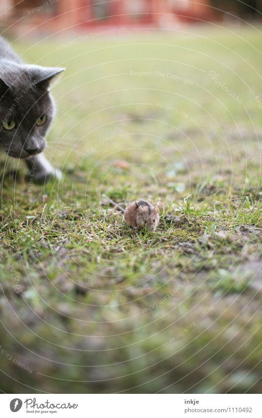 Cat Animal Emotions Meadow Grass Small Garden Fear Wild animal Dangerous Observe Hope Curiosity Fear of death Running Pet