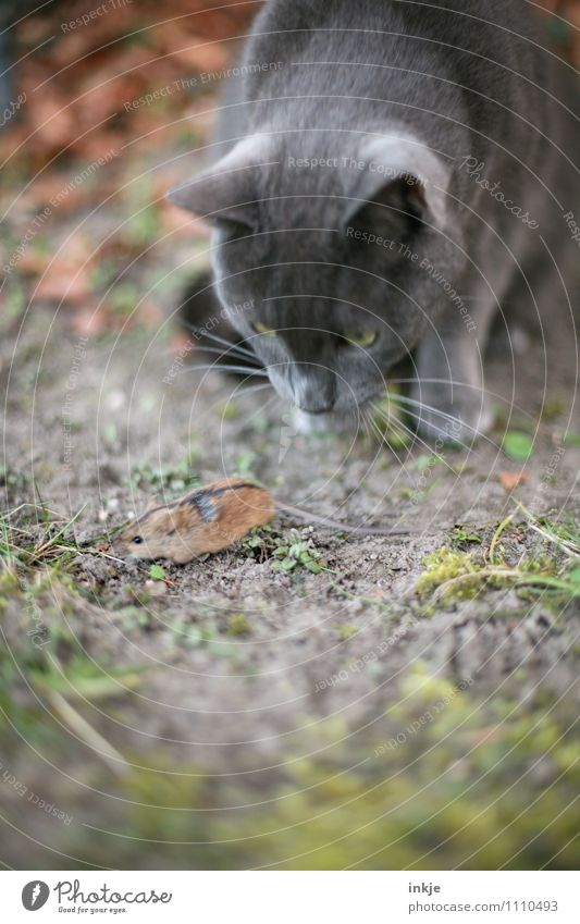 <--- --- - Garden Park Meadow Pet Wild animal Cat Mouse Animal face 2 Observe Hunting Running Small Speed Emotions Optimism Curiosity Interest Fear Horror