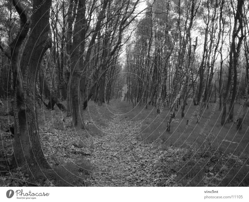 Forest road-bw Fairy tale Nature Lanes & trails Black & white photo