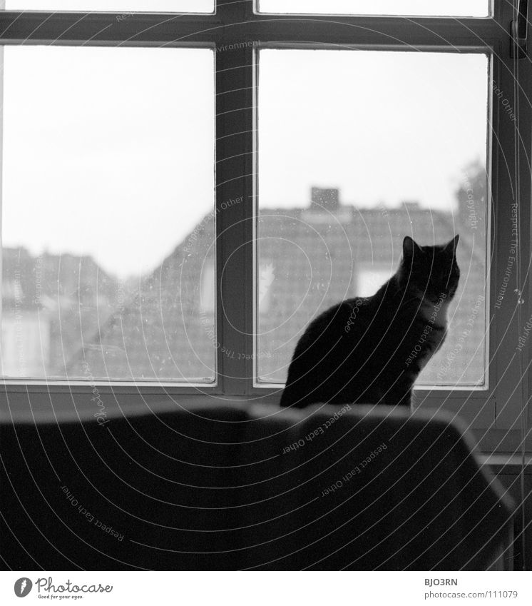 Animal Dark Autumn Cat Observe Idyll Mammal Pet Afternoon Domestic cat Photos of everyday life