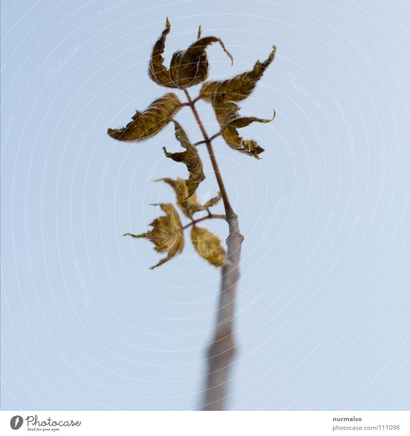Leaf Autumn Brown Fear Branch End Middle Decline Tree trunk Dew Few Panic Limp Rod Last Apocalyptic sentiment