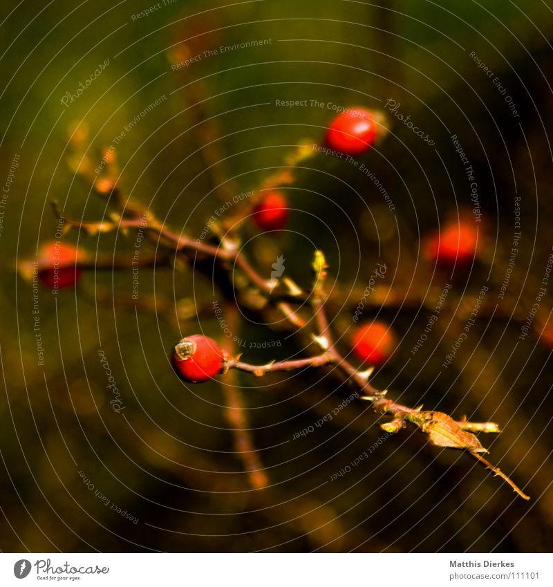 Nature Plant Red Dark Sadness Autumn Death Think Food Line Fruit Fear Arrangement Gloomy Bushes Branch