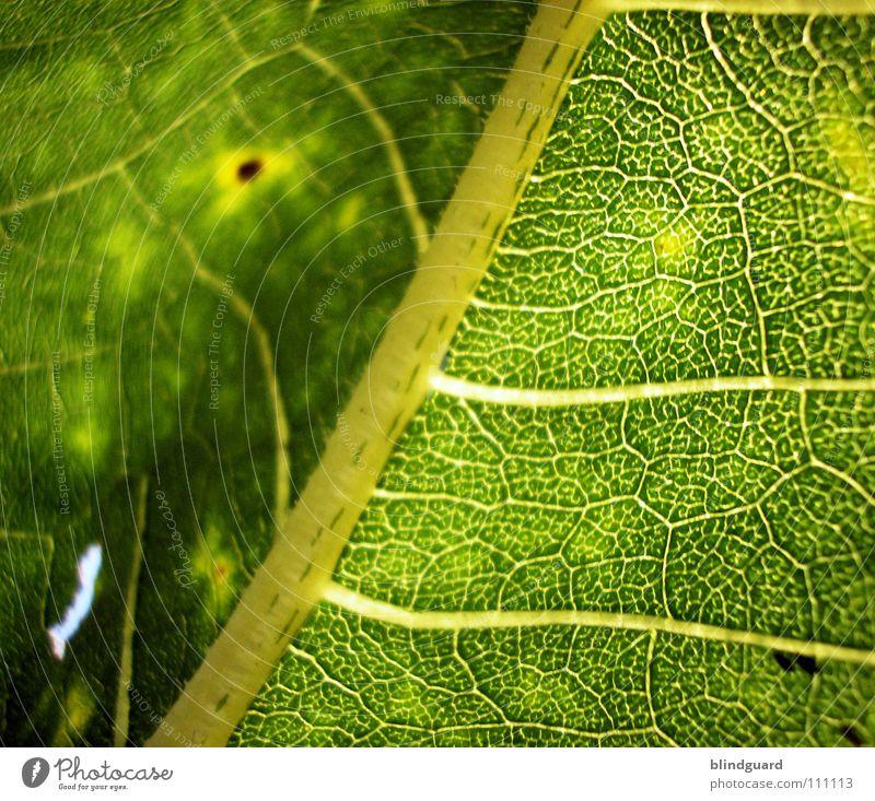 Green Plant Summer Leaf Yellow Colour Life Dark Death Autumn Above Garden Lamp Park Warmth Food