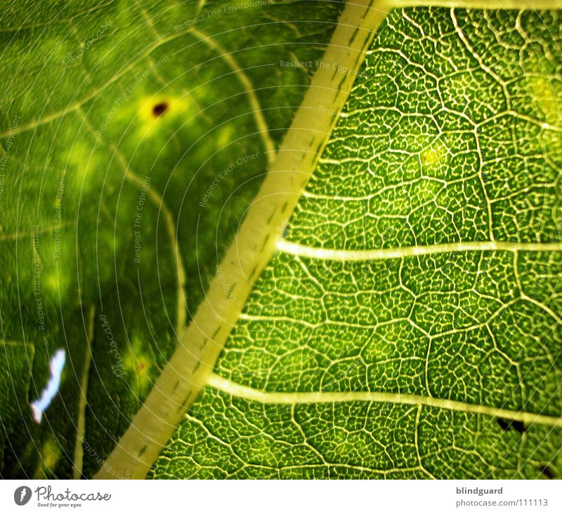Structure to Blur Soft Leaf Physics Fine Branchage Sunflower Green Plant Biology Fresh Grass green Juicy Gardener Summer Perspective Tendril Flourish Growth