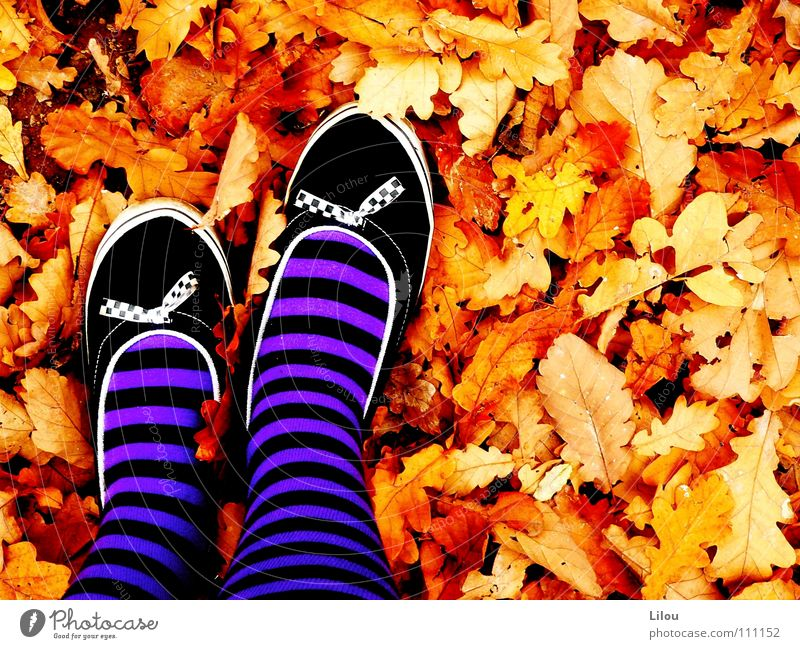 White Red Leaf Black Yellow Autumn Footwear Brown Orange Circle Violet To fall Stripe Stockings Human being Hardcore