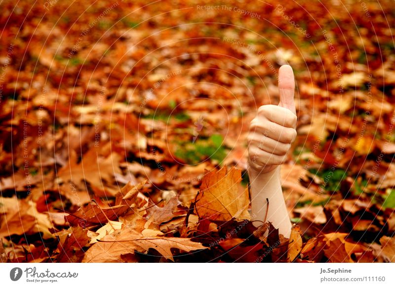 I feel good! by hand Autumn Forest Brown Orange Success Whimsical Thumb Gesture Undead Autumn leaves Hide Exceptional Meaning OK Copy Space left Colour photo