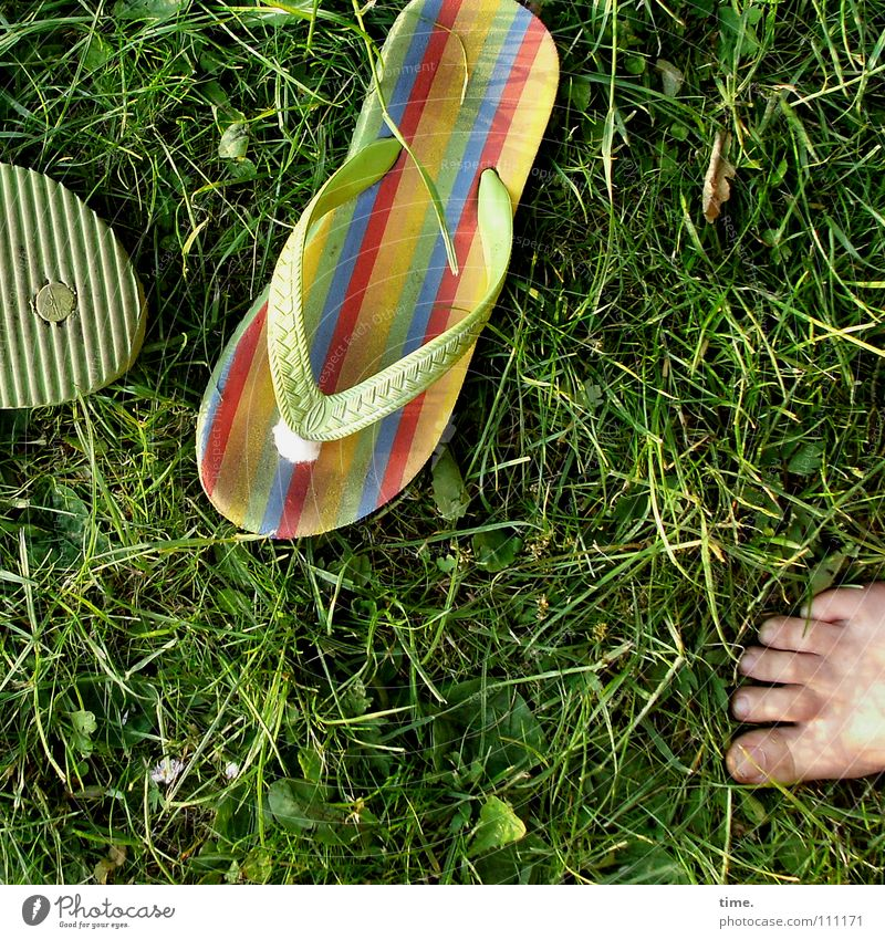 Green Summer Joy Vacation & Travel Life Meadow Grass Feet Dirty 3 Lawn Leisure and hobbies Barefoot Thorny Sandal
