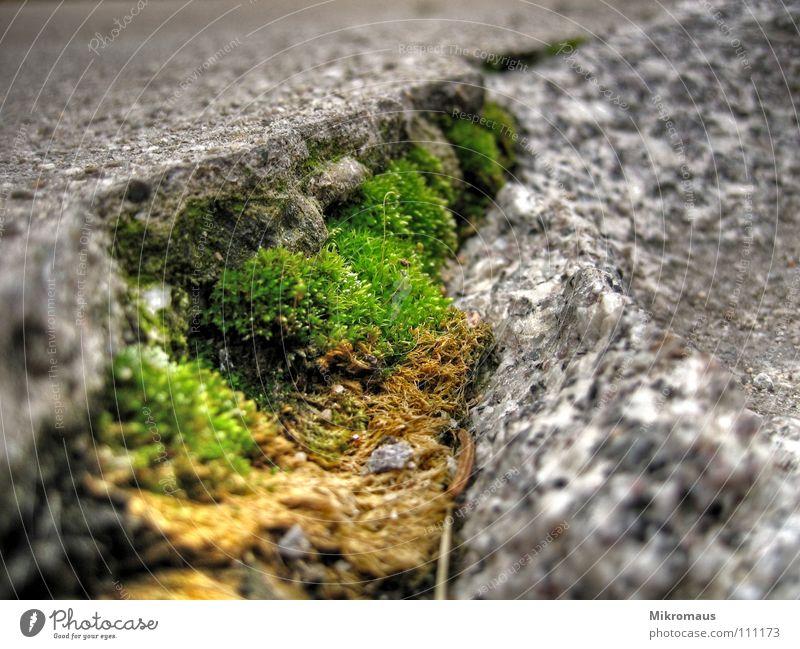 Green Plant Mountain Lanes & trails Stone Rock Growth Soft Moss Furrow Hard Column Cervasse Minerals Photomicrograph Granite
