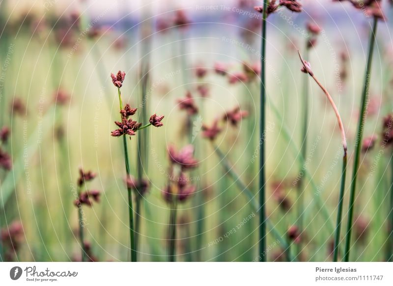 Plant Blue Green Beautiful Summer Flower Red Loneliness Far-off places Blossom Spring Meadow Grass Healthy Garden Freedom