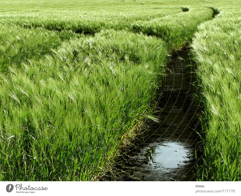 Water Green Plant Black Nutrition Spring Lanes & trails Sand Together Field Waves Food Wind Wet Horizon Earth