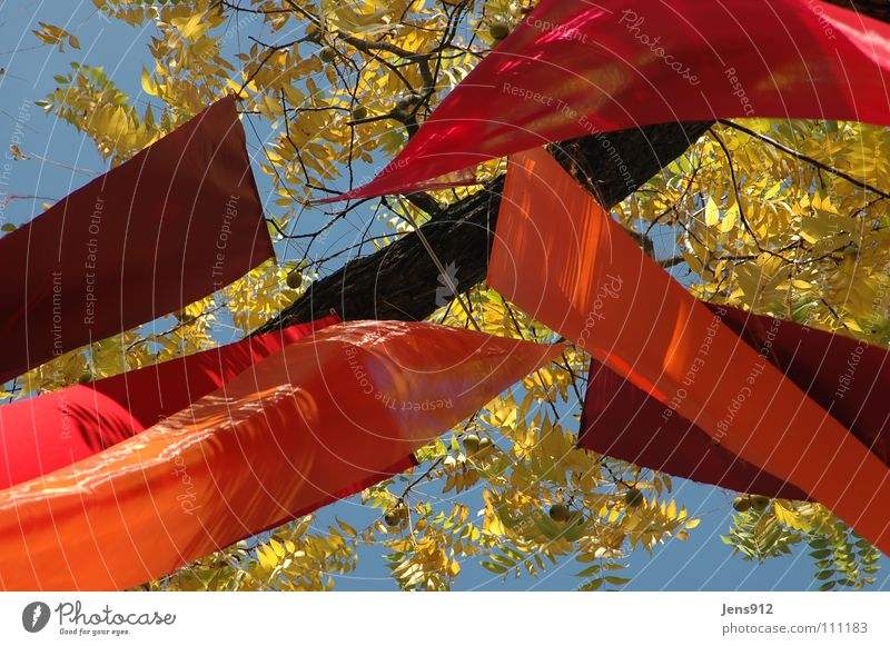 autumn banner Autumn Flag Red Violet Cloth Leaf Tree Yellow Decoration Sky autumn wind Wind Orange Branch Twig Blue