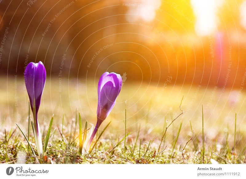 Sky Nature Plant Sun Flower Landscape Meadow Spring Grass Natural Happy Glittering Park Contentment Growth Illuminate