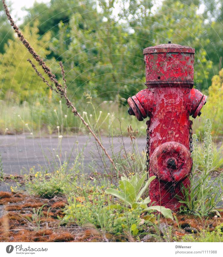 hydrant Lifestyle Garden Hydroelectric  power plant Environment Nature Landscape Water Plant Flower Grass Moss Park Meadow Industrial plant Factory Ruin
